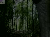 Dans les bois 4